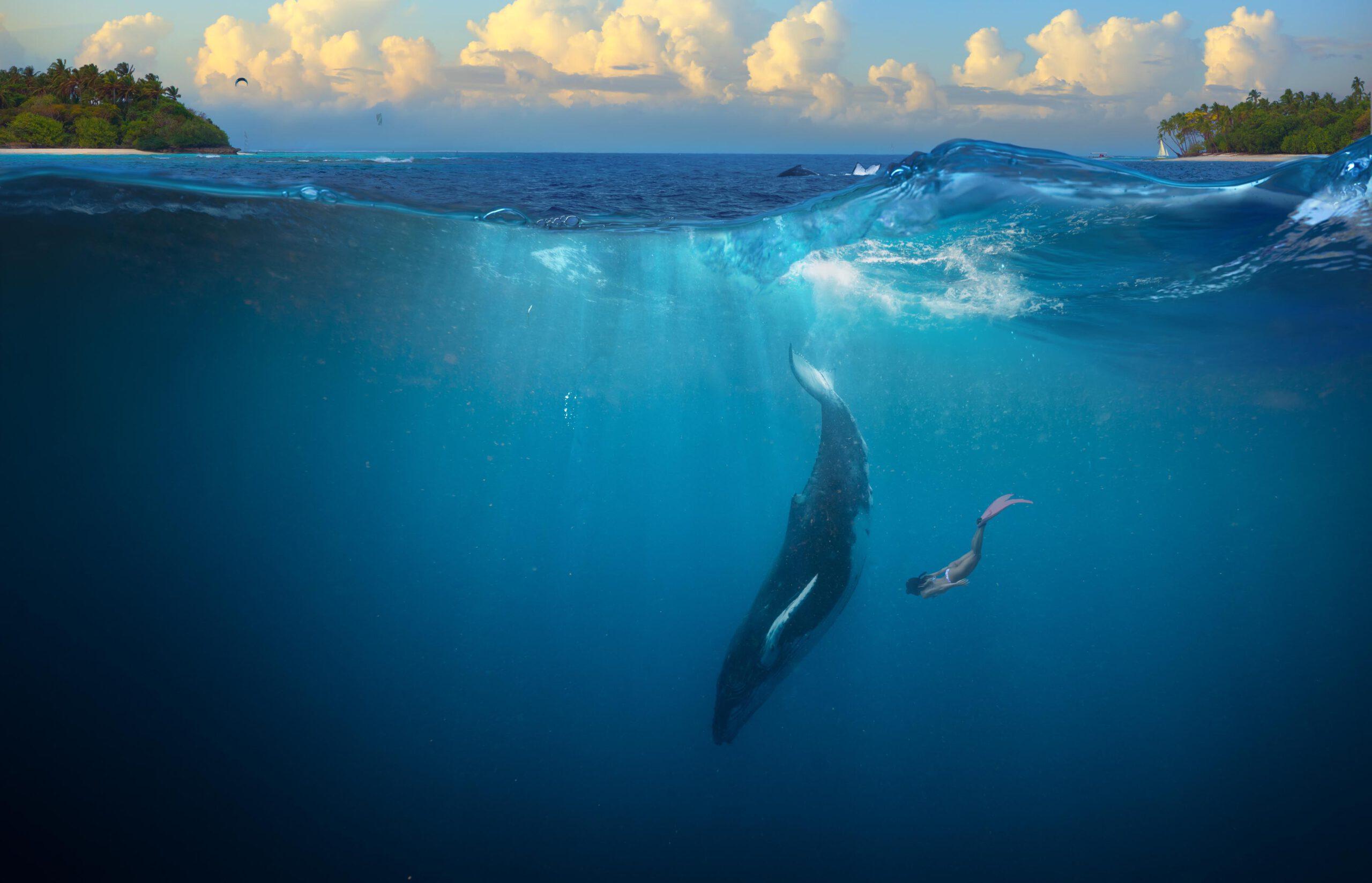 Zwemmen met bultrugwalvissen